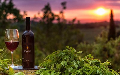Best Wineries And Winery Industry In Canada