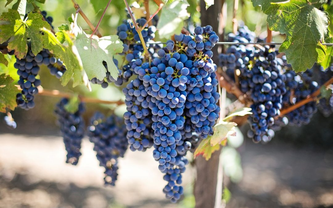 Niagara Peninsula Region And Wineries There